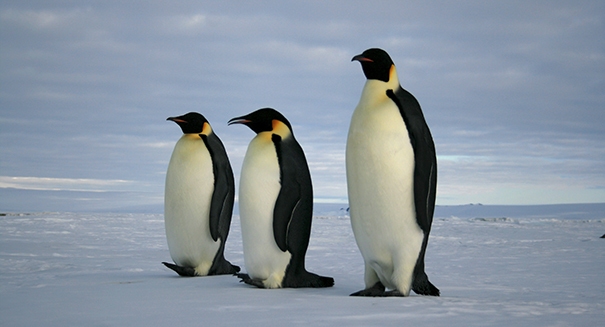 Giant iceberg results in death of about 150,000 penguins