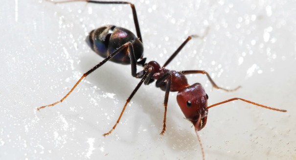 Ant discovery stuns scientists