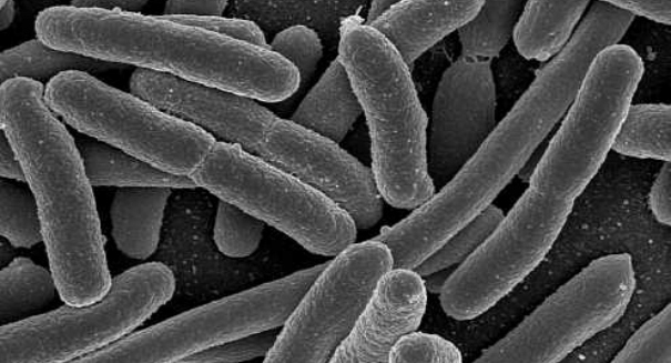 Stunning superbug discovery alarms scientists
