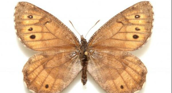 Huge discovery: Butterfly could change opinions on Global Warming