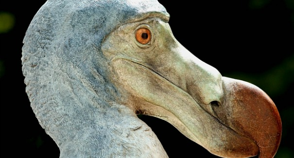 The amazing story of how the Dodo bird became extinct