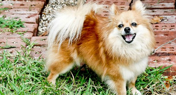 This common substance will poison your dog
