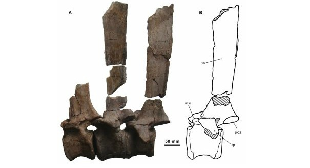 Stunning find: Bizarre 'sail-backed dinosaur' from Spain
