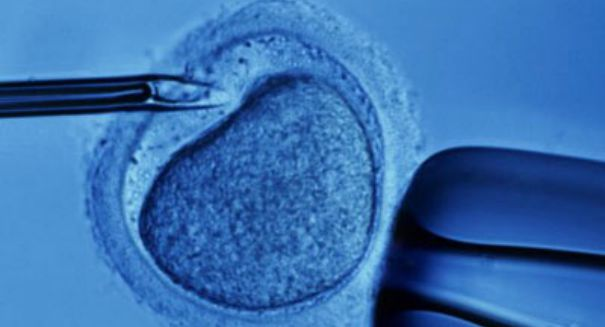 New study is bad news for infertile women looking for donor eggs — here's why
