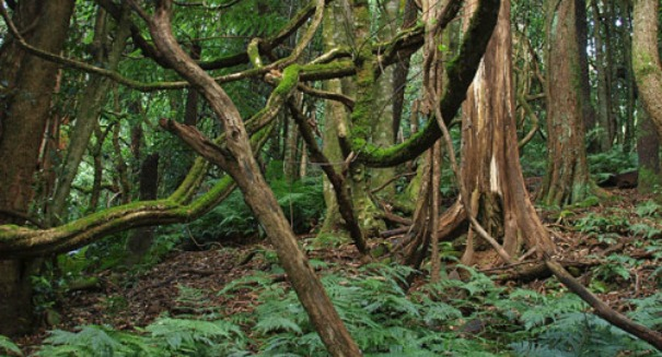 Scientists alarmed to find jungle vines speeding up Global Warming