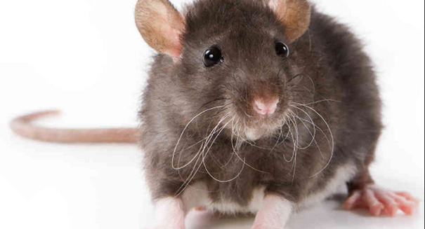 Park officials: Deadly hantavirus claims another victim