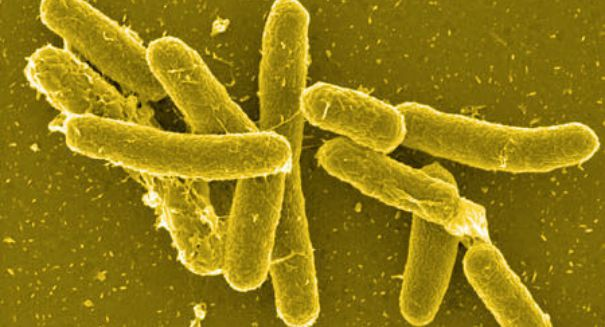 U.S. authorities scramble as salmonella outbreak out of Mexico sickens hundreds