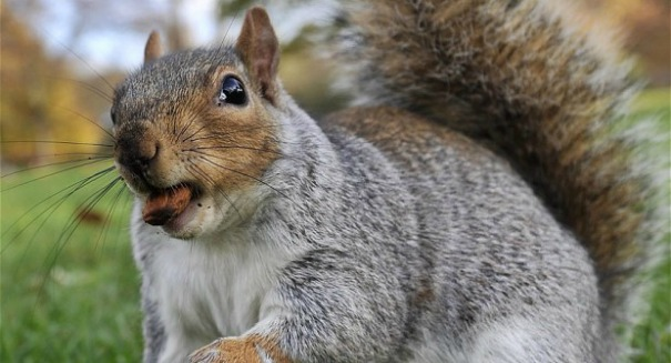 Officials scramble after squirrel virus kills 3 people in Germany