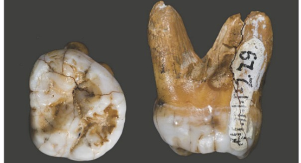 Early humans would have broken their jaws eating this common food